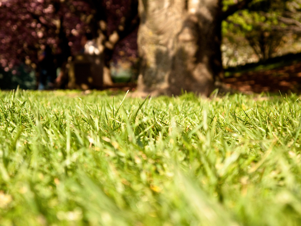 Which Grass Type Is Right For Your Lawn?