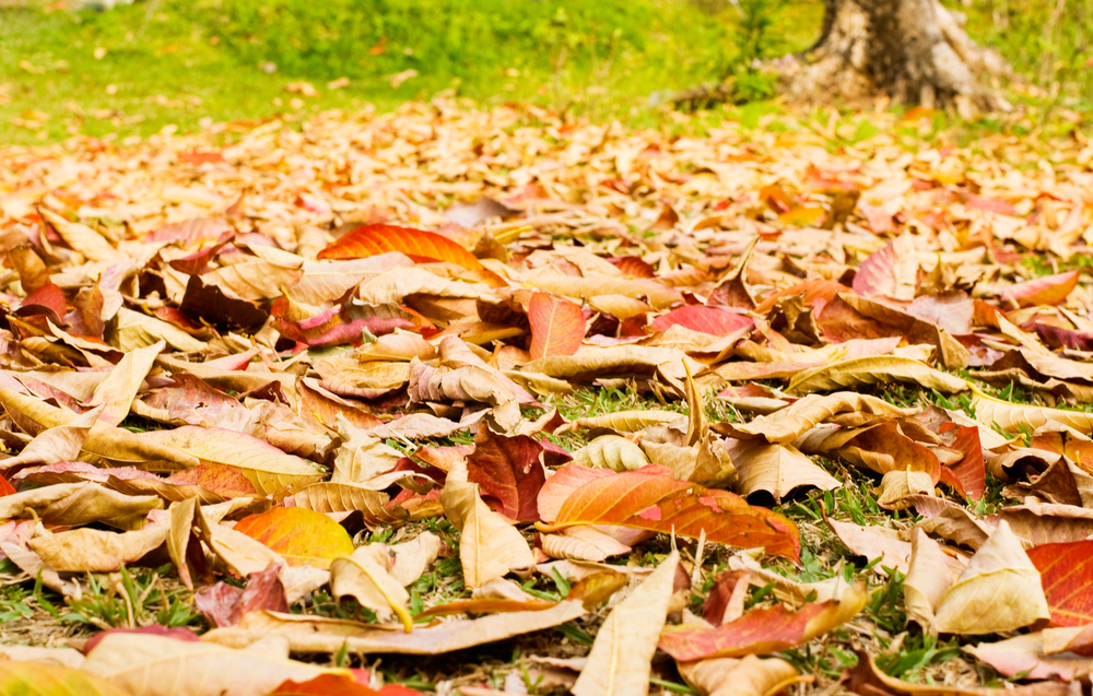 3 Things Your Lawn Needs This Fall