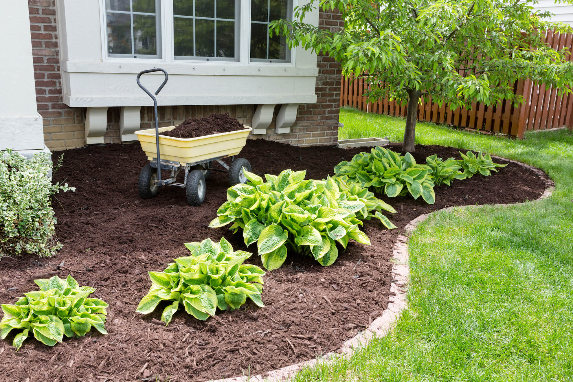 All About Mulch!