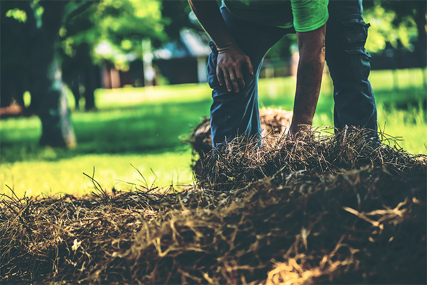 How To Mulch Your Landscape In The Spring Season